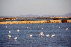 10-flamingos-in-san-pedros-natural-park-and-salt-lake-area-custom-l